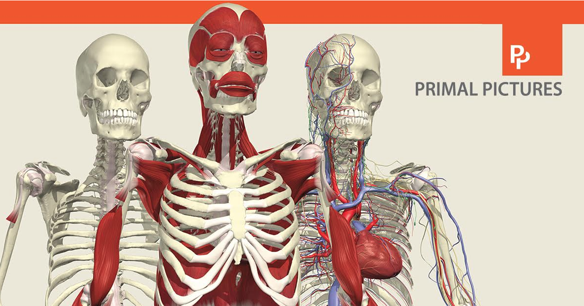 Primal Pictures: The Most Complete and Medically Accurate 3D Model ...